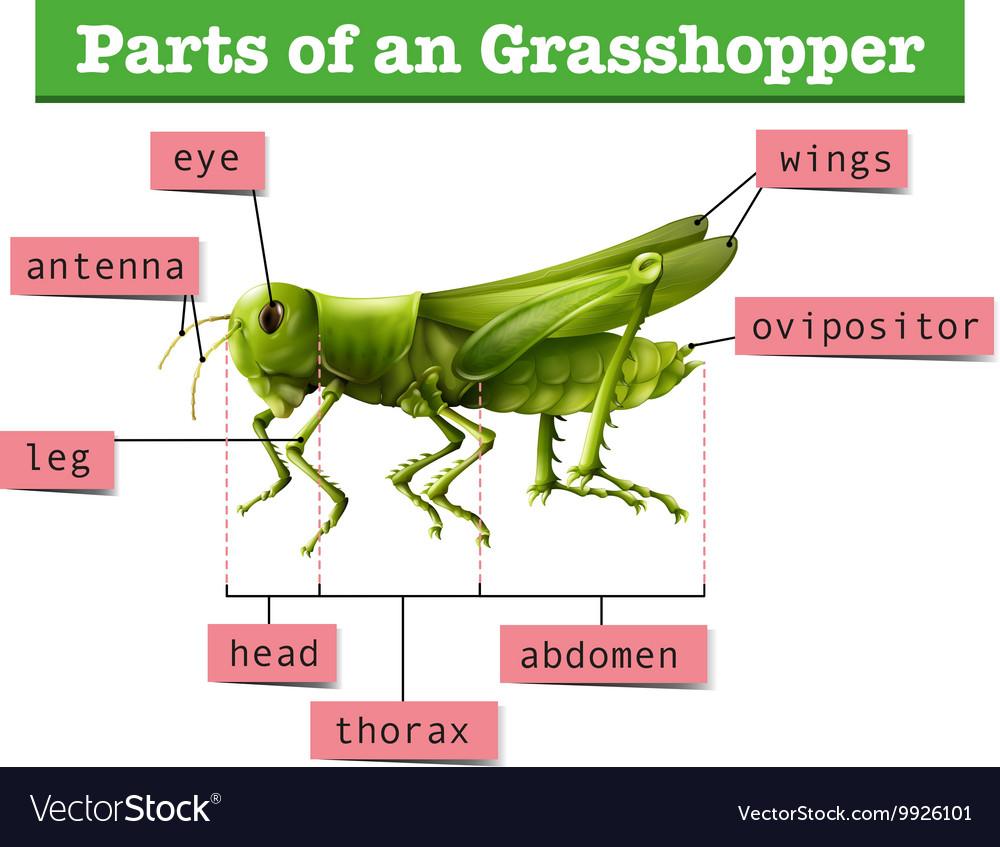 grasshopper manual