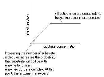 effect of substrate concentration on enzyme activity pdf