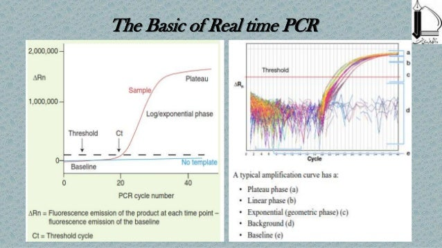 how old can a sample of dna before pcr