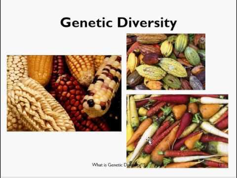 genetic diversity in plants pdf