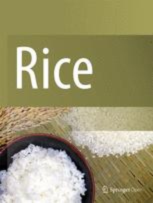 every grain of rice pdf download